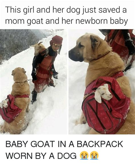 Dog Mom Meme - 25 best memes about baby goats baby goats memes