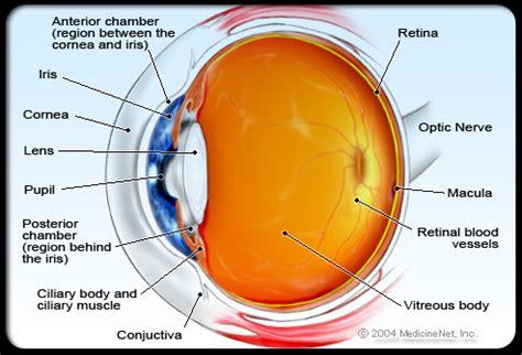 diagram mata macam macam organ dalam dan penyakit