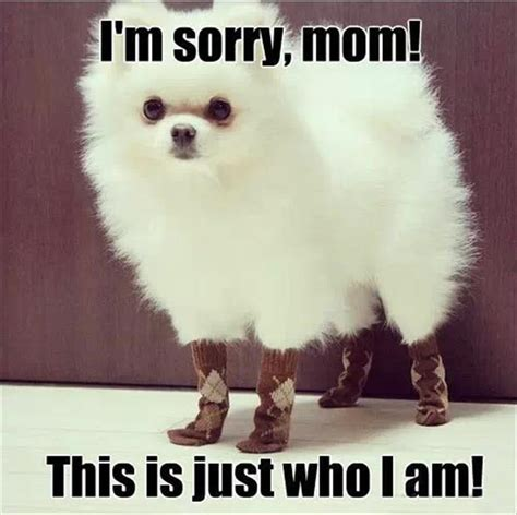 I Am Sorry Meme - i m sorry mom this is just who i am dog memes comix