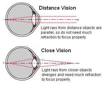 presbyopia | presbyopic | eye accommodation