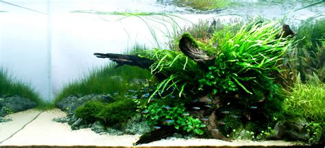 Aquascape Ada by Aquarium Colorology Entering Grey Territory With Neutral