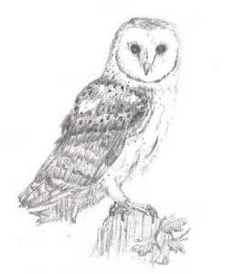 owl pencil drawing flickr photo sharing
