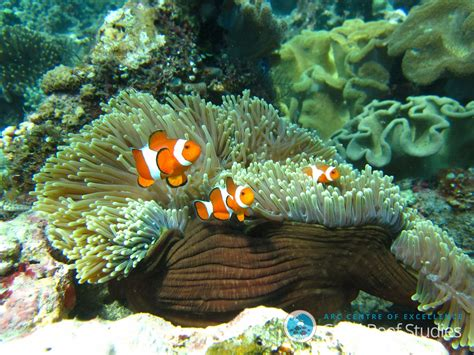 Dd Reef Paste 270 Gr coral reef fish are more resilient than we thought study finds ncpr news
