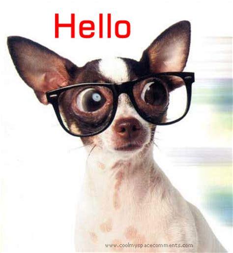 hello puppy hello 組圖 影片 的最新詳盡資料 必看 www go2tutor
