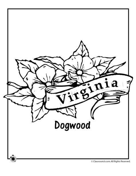 coloring page of dogwood flowers virginia state flower coloring page woo jr kids activities