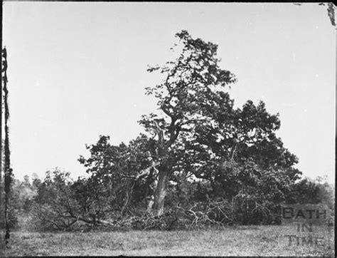royal oak tree lighting oak tree struck by lightning ashwicke park 1857 by 13314