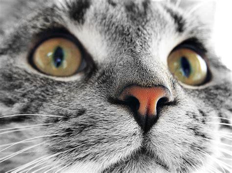 wallpaper desktop cat best desktop hd wallpaper cat desktop wallpapers