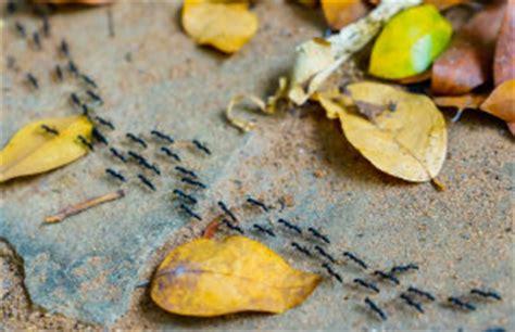 Ameisen Im Garten Bekämpfen by Ameisen Im Garten So Bek 228 Mpfen Sie Das Problem Bewertet De