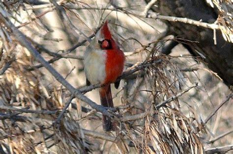 alimentazione passero un passero assolutamente inusuale met 224 maschio e met 224