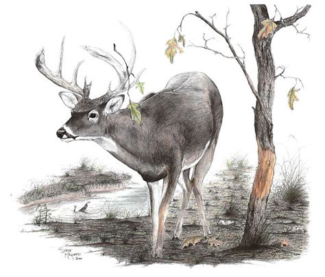 sick as hell drawing of a whitetail buck | Hunting and ... Whitetail Buck Drawings