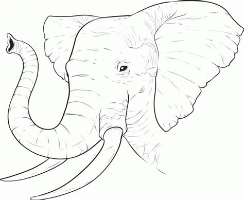 elephant face coloring page coloring home