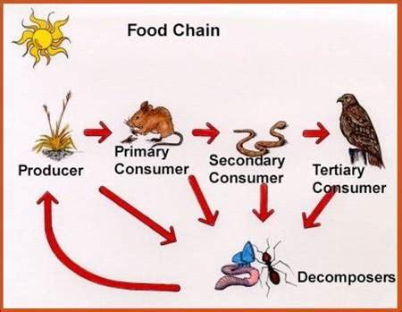 Ford Chaign Food Chain Numnedz
