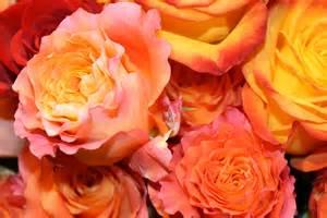 Mail Order Wedding Flowers - gallery