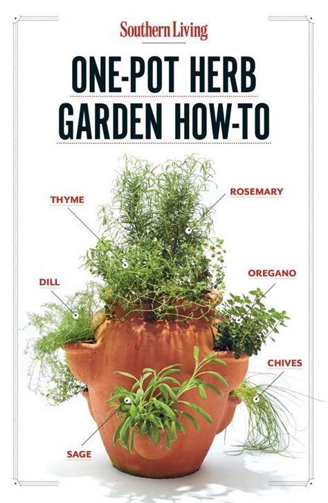 grow    pot herb garden   home