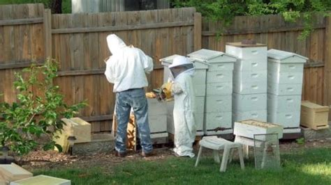 having a beehive in your backyard 28 images can you