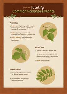Identifying Plant Diseases - how to prevent contact with poisonous plants fix com