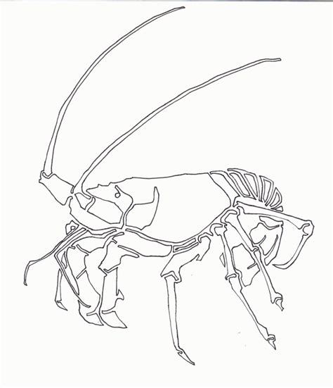 lobster coloring page az coloring pages