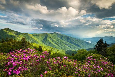 blue ridge parkway asheville nc blue ridge parkway spring flowers photograph