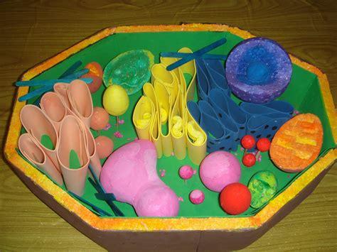 biolog 237 a y geolog 237 a smsavia ver imagenes de maquetas de la celula vegetal tarentola una web de ciencias web educativa