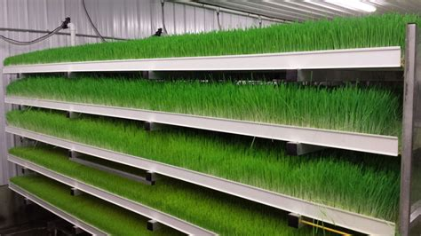 Home Design Plans With Photos In Kerala by Why Do Foddertech Systems Use Long Growing Trays