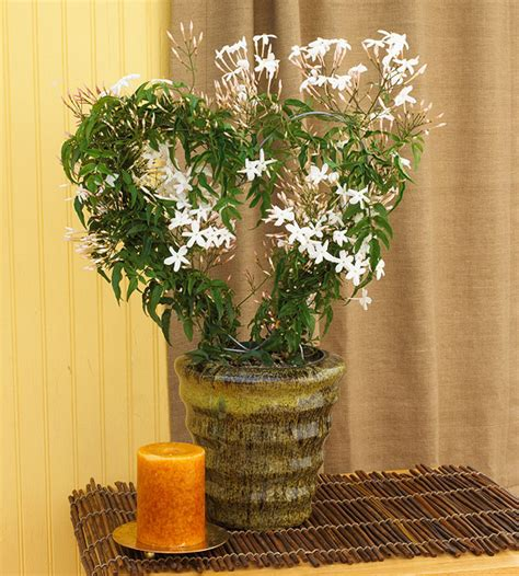 most fragrant indoor plants invite nature in with 31 indoor plant ideas