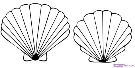 how to draw a seashell seashells step by step stuff