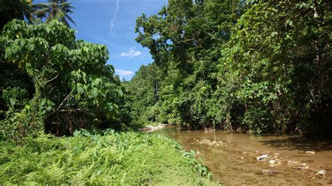 Jungle Landscape Pictures Vegetation Jungle Wallpaper 783181
