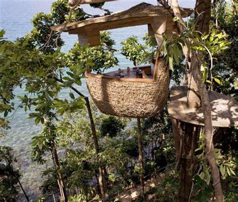 Tempat Makan Burung Unik restoran sarang burung di thailand revolutionary rebellion