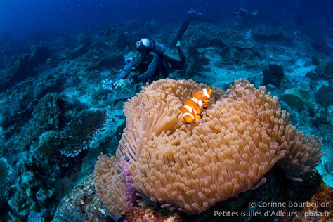 Tas Borneo Island photo subaquatique