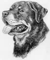how to draw a rottweiler rottweiler puppy favorite colouring pages puppys rottweilers and