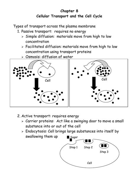 cellular transport and the cell cycle worksheet worksheet cellular transport and the cell cycle worksheet
