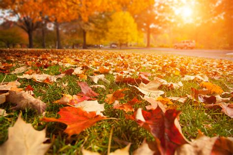 in fall 3 fall lawn care tips hrl landscaping