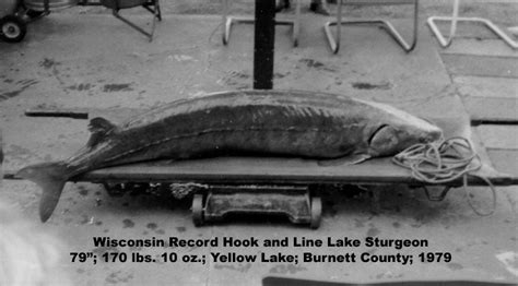 Wisconsin Records Lake Sturgeon Fact Sheet Fishing Wisconsin Dnr