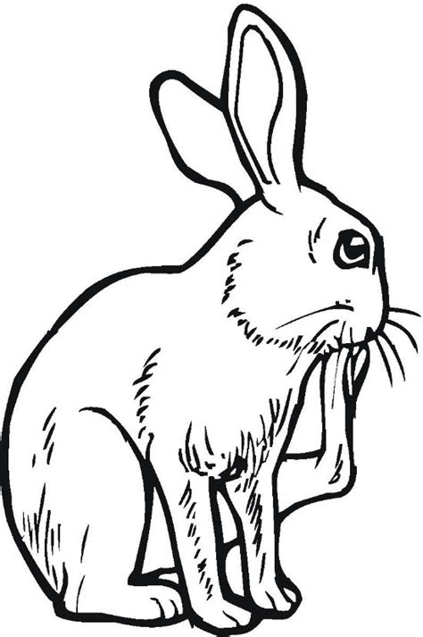big bunny coloring pages bangers and mash free colouring pages