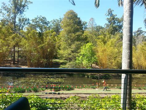 Botanical Gardens Cafe Brisbane Brisbane Botanical Gardens Mt Coot Tha Cafe Fasci Garden