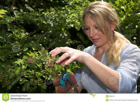 bush trimming women pruning the tree royalty free stock images image 865579