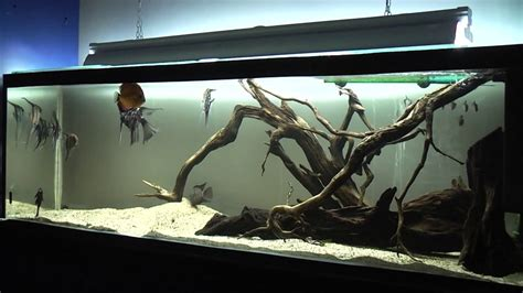american aquascapes wild wood roots fish tank central and south american
