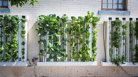 buy guide   zipgrow farm wall youtube