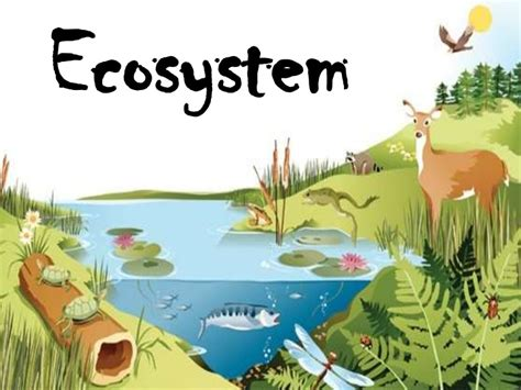 Teh Eco 1 Dus post 1 energy flow in ecosystems ale jaime s