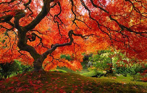 25 magnifiques paysages d automne joli joli design