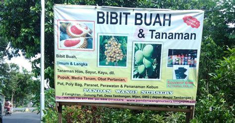 Jual Bibit Cendana Wangi Yogyakarta bibit tanaman buah di semarang bibit tanaman buah di semarang