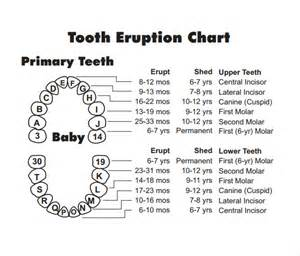 dental chart template image gallery teeth charting