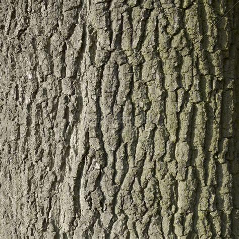 Rinde Der Eiche by Natur Hintergrund Baum Laubbaum Rinde Eiche Rau