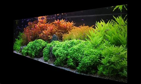 Aquascape Malaysia How Did They Do This The Planted Tank Forum