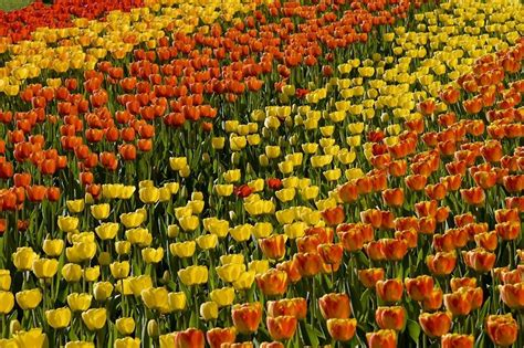 britzer garten tulpenschau 2018 tulpenschau quot tulipan quot berlin av berichte fotos und