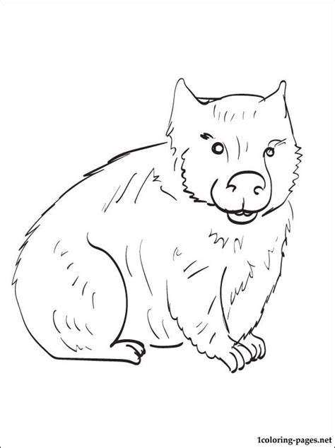 Wombat Coloring Page To Print Out Coloring Pages Wombat Coloring Page