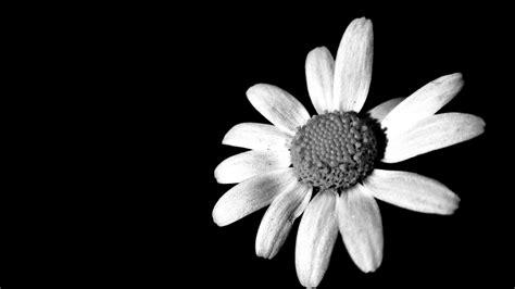 imagenes y fotos en blanco y negro blanco y negro imagen foto plantas flores mis