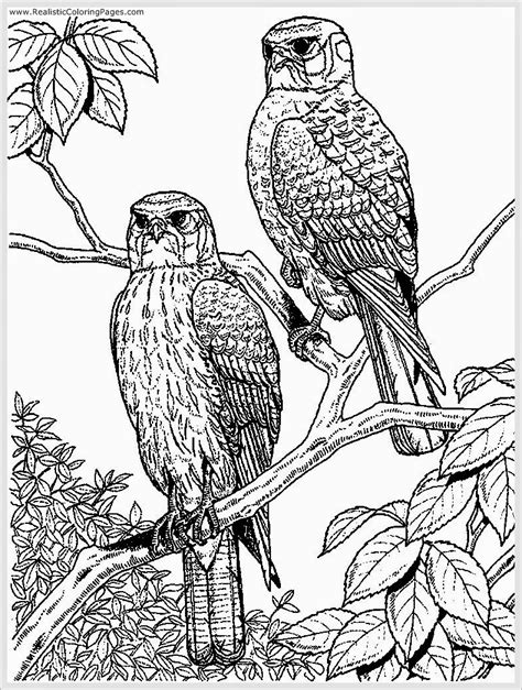 realistic eagle coloring pages free coloring pages