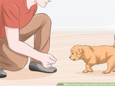 how to choose a puppy from a litter 3 ways to choose a puppy to keep from your litter wikihow