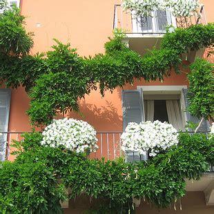 balconi fioriti in inverno fiori e piante da balcone idea creativa della casa e